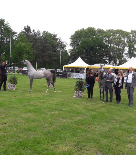 Arabian Horse Weekend in Sint-Oedenrode onderdeel van wereldtour