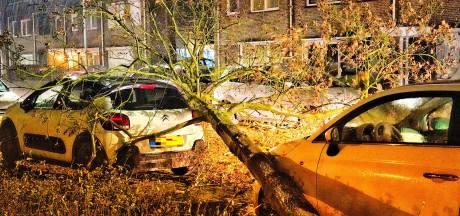 Stormschade na flinke windstoten, wegen korte tijd geblokkeerd in Boxtel en Gemonde na omgevallen bomen