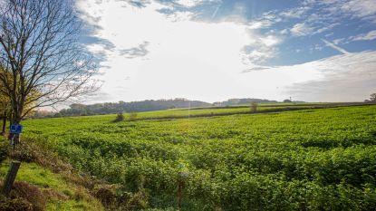"""Kesterheide erkend als natuurgebied, """"maar landbouw en toegankelijkheid moeten blijven"""""""