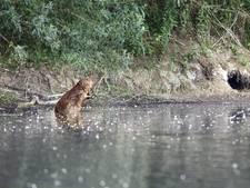 Boswachter houdt natuur beleefbaar met beversafari's en snorkelexcursies