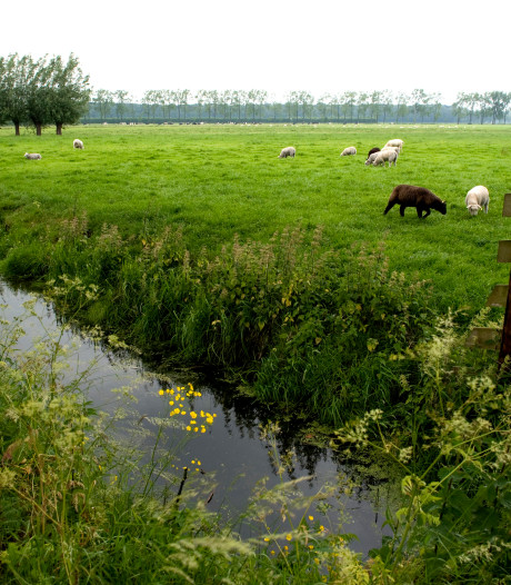 'Utrecht moet natuur in regio opkopen'