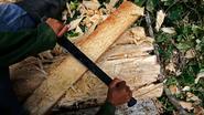 Bijna 200 arrestaties om illegale houthandel