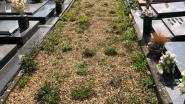 """""""Dat begraafplaatsen er zo bijliggen, is respectloos"""": Bewoner klaagt onverzorgde situatie kerkhoven aan"""