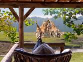 Vakantiehuizen tussen wilde dieren leveren honderden banen op bij Beekse Bergen