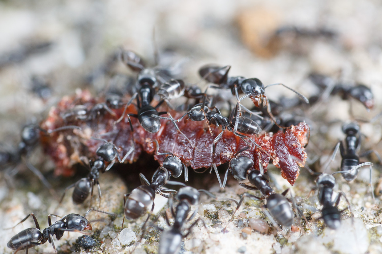 Draaigatjes zoeken naar alles waar suiker of eiwitten in zitten, zoals hier een worm.