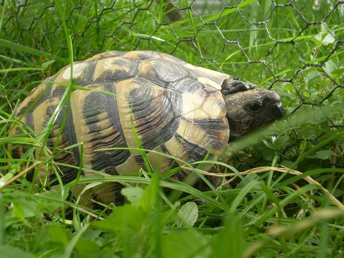Een schildpad