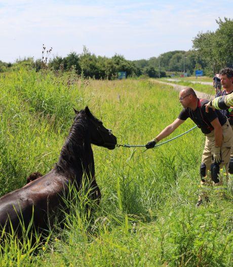 Paard uit sloot bij Zoutelande gered