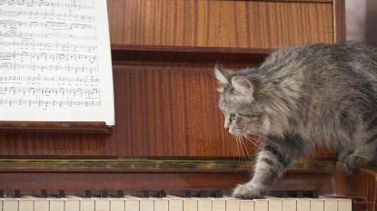 De reden waarom katten zo'n asociale wezens zijn