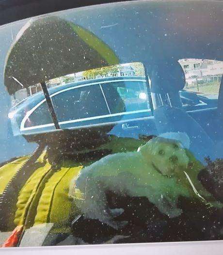 Hondje door politie uit hete auto bevrijd in Tilburg