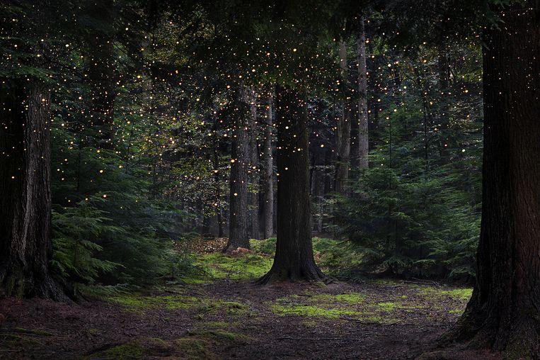 Een goddelijke ervaring kan overal in zitten, bijvoorbeeld in de natuur. Kunstwerk 'Stars number 14, 2014-2015' Beeld ellen davies
