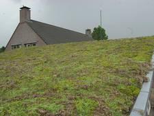 Tilburg betaalt de helft van je groene dak
