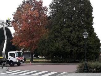 """Technische dienst vindt beeldhouwwerk metershoog in boom: """"We staan voor een raadsel"""""""