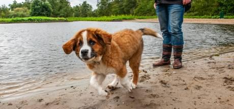 Nieuw paradijs voor honden bij Reeuwijkse Hout