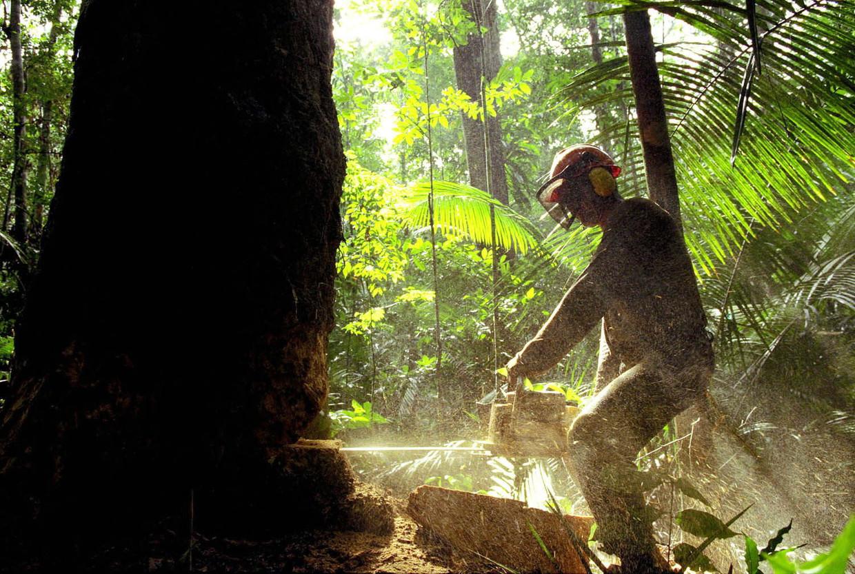 Bomenkap in het Braziliaanse Amazonegebied.