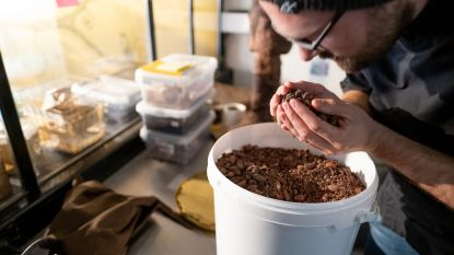 The Cacao Project schenkt Dijlestad tweede streekproduct: het Mechels peertje