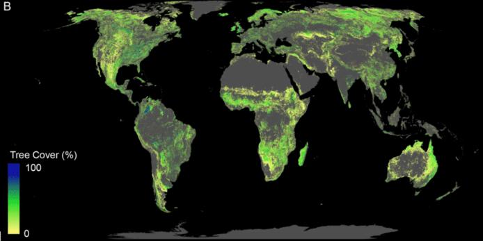 Le potentiel de reforestation mondiale est ici bien visible. Du jaune au bleu, de moins au plus suscpetible d'être planté. Les villes, terres agricoles, régions déjà boisées et marécageuses ont été exclus de la carte.