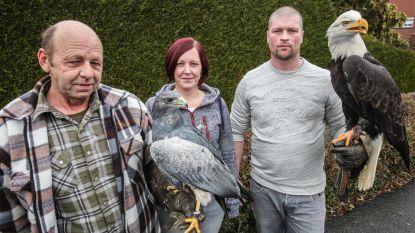 Kortrijk voert verbod op roofvogelshows in