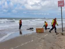 Zeehond met diepe wonden in hals en nek uit visnet gered op strand bij Ter Heijde