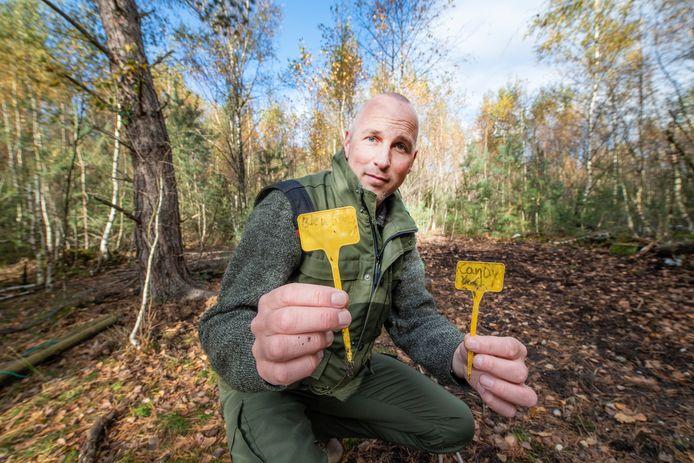 Boswachter Laurens Jansen laat zien welke hennepplanten er kennelijk in het bos werden geteeld.