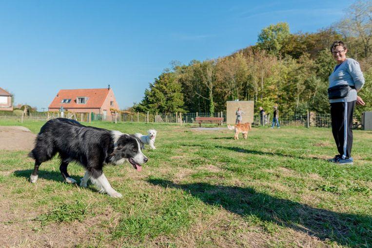 De honden hebben het duidelijk naar hun zin op de weide in het domein Fort van Beieren.