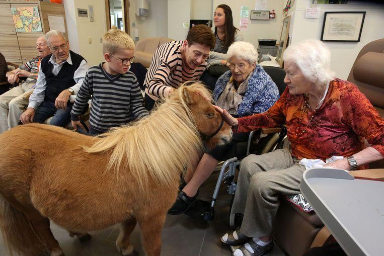 De pony's waren de sterren van de dag in Sint-Antonius