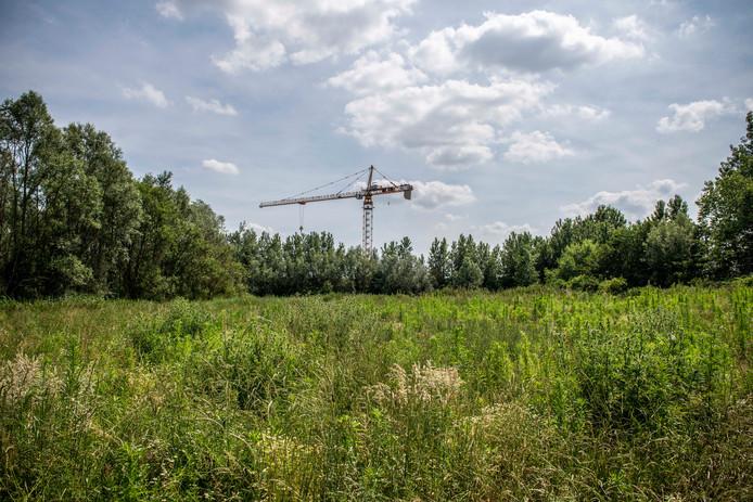 Het weiland in Westdorpe waar de vrouw werd gevonden.