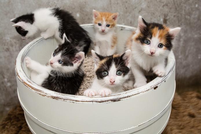 Cin's Snoetjes en Snuitjes zette deze kittens op de foto.