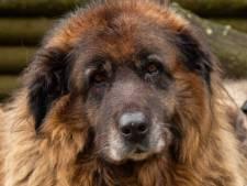 Rotterdamse probeert via de rechter haar eigen hond terug te krijgen