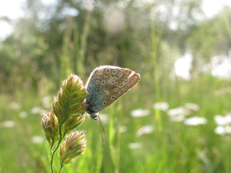 Natuurgebied De Oeverlanden is rijk aan insecten. Beeld Hans Bootsma