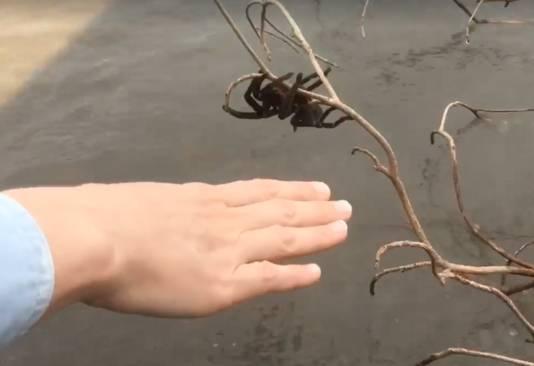 Andrea steekt haar hand uit, maar uiteindelijk werd de spin met tak en al verplaatst.