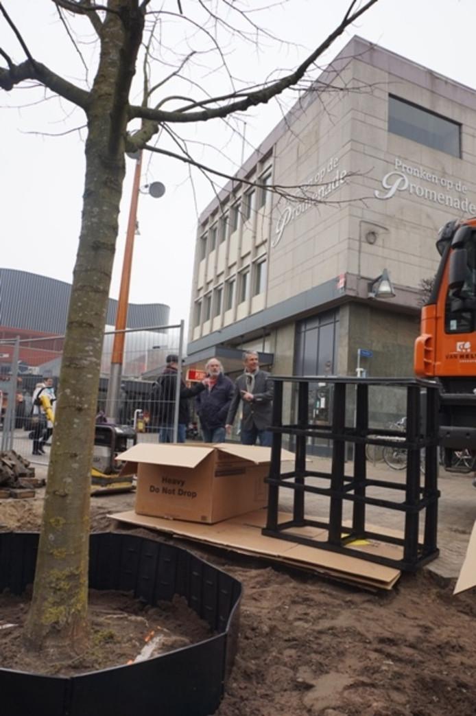 Nieuwe boom aan de Oude Markt, rechts het 'wijnrek-systeem'