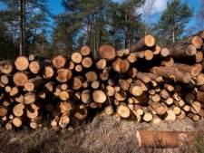 Doesburg kapt 70 bomen en plant er 49 terug