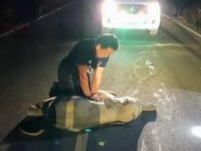 Thaise politieagent reanimeert aangereden babyolifant