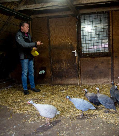 Botte pech treft kinderboerderijen in Apeldoorn die wéér dicht moeten: 'Telefoon stond roodgloeiend'