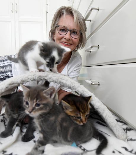 Asiels opvallend vol kittens: 'Het lijken wegwerpartikelen'