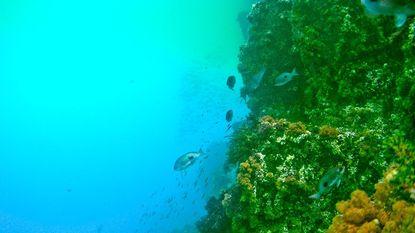 Radioactieve algen in VS door Japanse tsunami