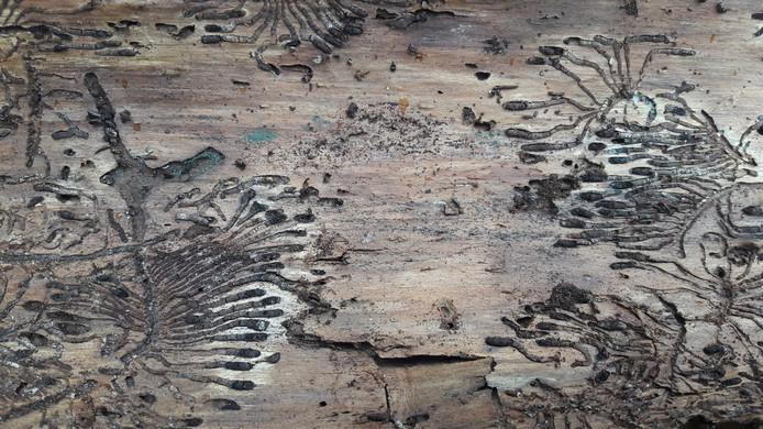 Het resultaat van het werk van de letterzetter. Deze foto is genomen in het bos aan de Burgemeester Aartslaan in Bergeijk.