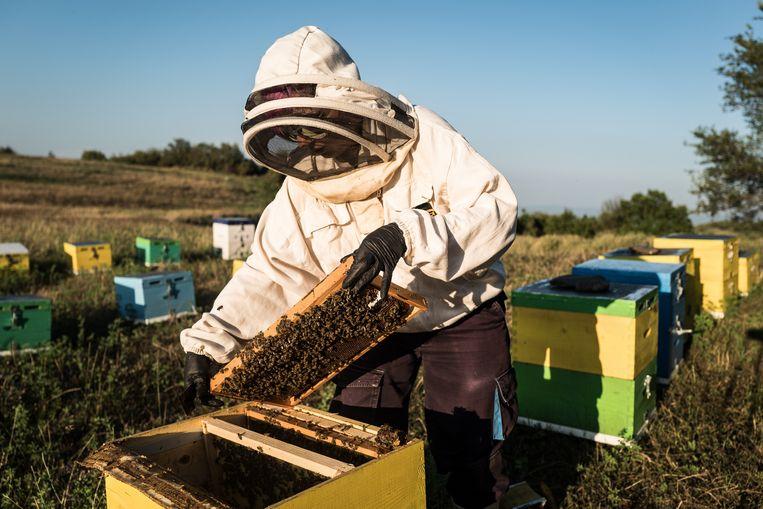 Marianna Rizouli met haar bijen in Ardameri, een dorpje bij Thessaloniki. Beeld Zolin Nicola