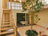 Geen tuin? Plant een boom in de woonkamervloer