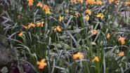 Verschillende gemeenten uit onze regio engageren zich om bloemen te zaaien voor bijen