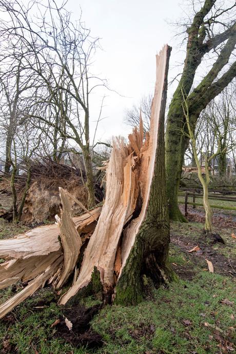 Twentse bossen taboe voor wandelaars na Westerstorm