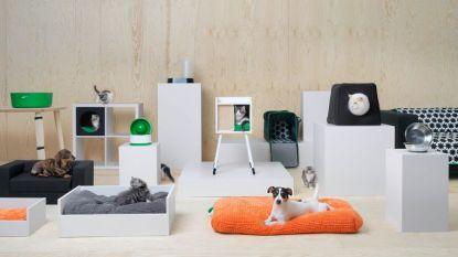 De IKEA huisdieren-collectie ligt nu ook in Belgische winkels