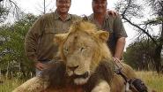 Doodgeschoten en onthoofd: bioloog onthult nieuwe feiten over gruwelijke dood van leeuw Cecil