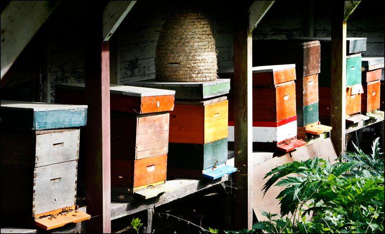 Bijenkasten (niet van Bijenbaas).  Beeld Foto Maarten Hartman