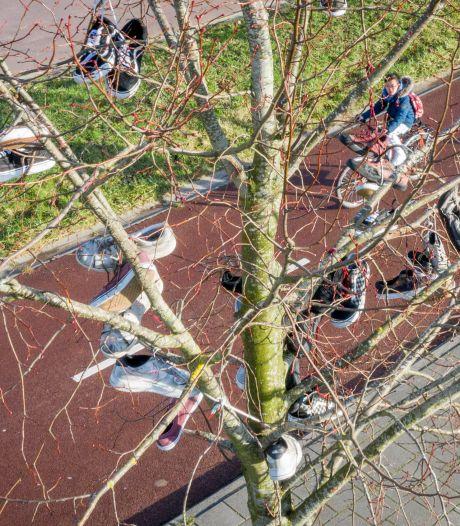 Sneakers in de boom zorgen voor klein raadsel