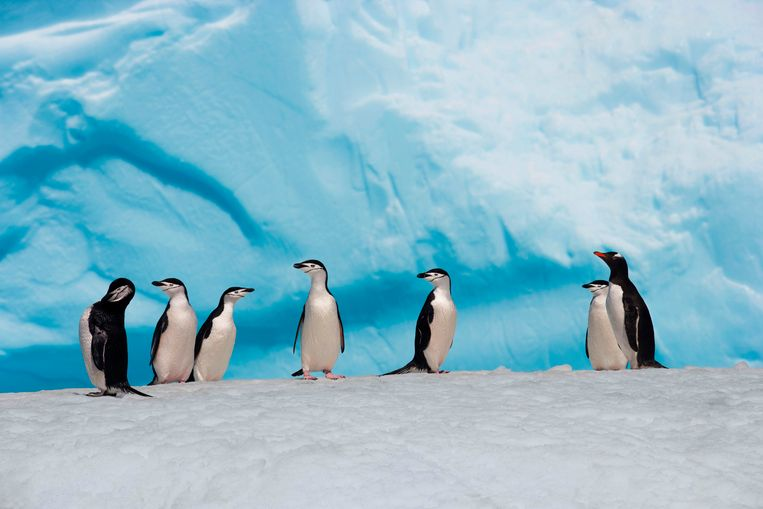 Pinguins in Antartica.