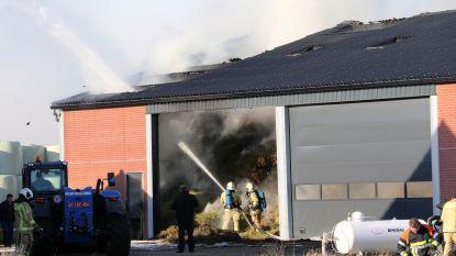 Loods brandt uit in Ravels-Eel