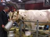 Missverkiezing voor Overijsselse koeien. 'Ze zijn bloedmooi'