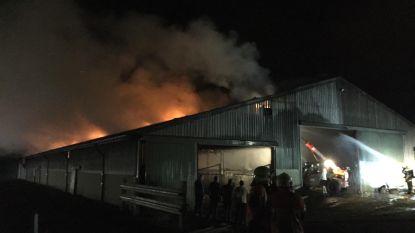 Brandgeur door felle boerderijbrand in Lessen en woningbrand in Appelterre
