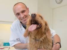 Goese dierenarts heeft nog maar één concurrent voor een plek bij wereldberoemde Dr. Pol